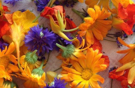 Blüten 3