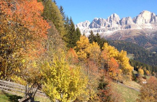 Herbstgeflüster …. Die Kraft der Wurzeln