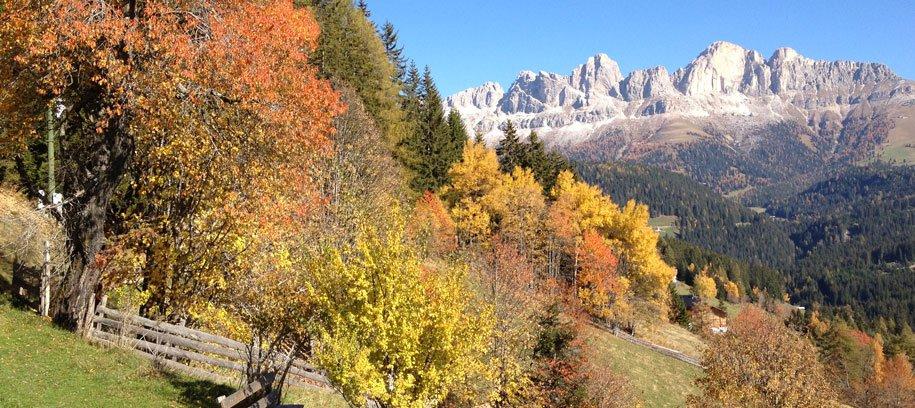 Pauschalangebot: Herbstgeflüster …. Die Kraft der Wurzeln